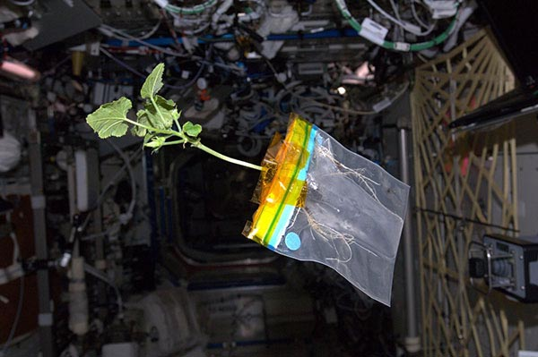 Photograph of a plant growing out of a plastic bag floating.