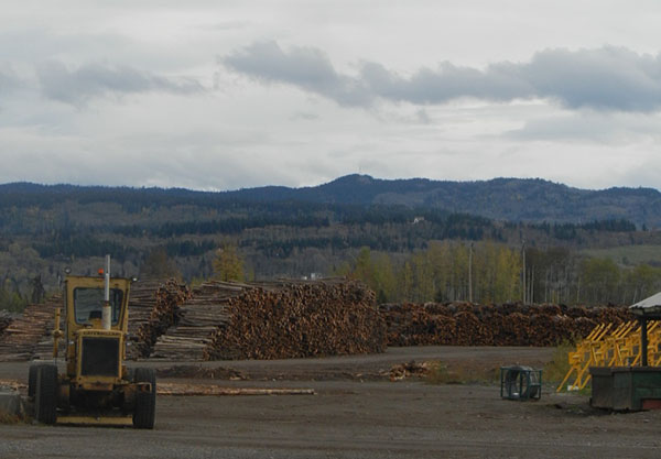Photograph of large piles of logs and heavy equipment in the foreground.