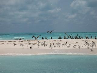 Birds on Isla Muertos