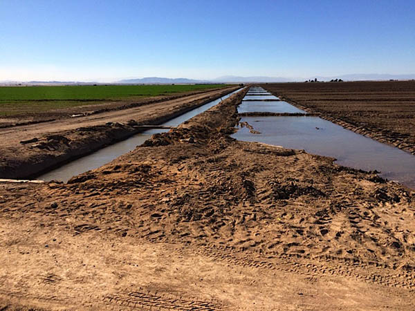 A system of canals irrigates the agricultural lands surrounding the Salton Sea, flooding plots to flush out salts, and eventually feeding in to the Sea itself.