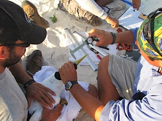 Measuring and Tagging Masked Boobies.