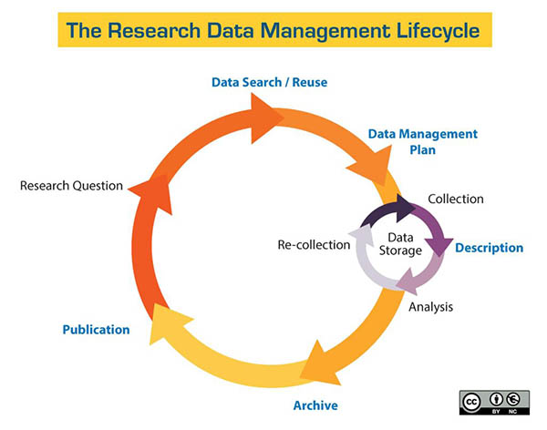 """Flowchart titled """"The Research Data Management Lifecycle,"""" depicting a circular flow chart in shades of yellow, orange and red. Big circle reads: Data Search/Reuse->Data Management Plan->Archive->Publication->Research Question). A smaller circle in shades of purple reads: Collection->Description->Analysis->Re-collection, Storage."""