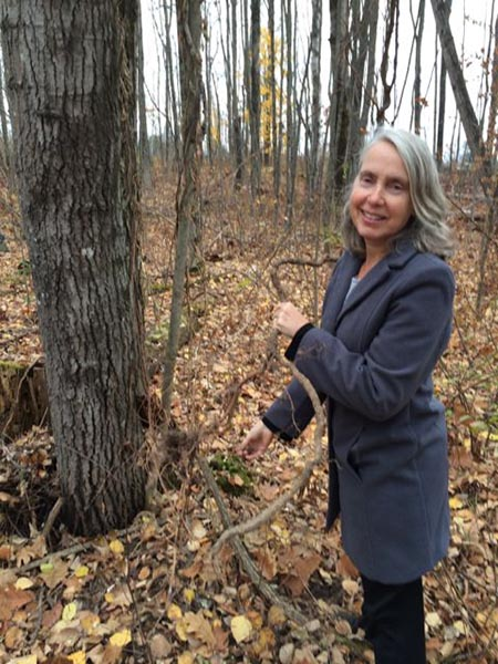 Judy Stone eradicating Asiatic bittersweet. Photo credit: Judy Stone. Stone, a grey-haired woman in a blue coat, stands among tree trunks surrounded by reddish brown leaf litter, holding a brown vine.
