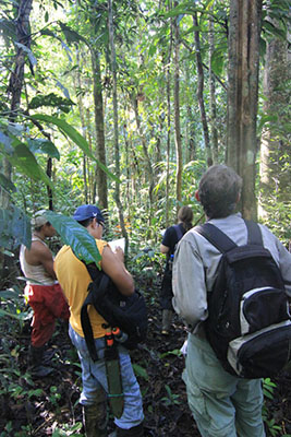 Four men with backpacks stand in the jungle, with two looking up at the trees