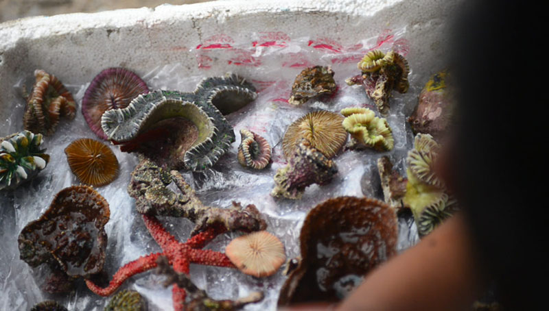 Photograph of colorful live coral.