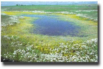 Photograph of a field with a large area of shallow water in the middle.