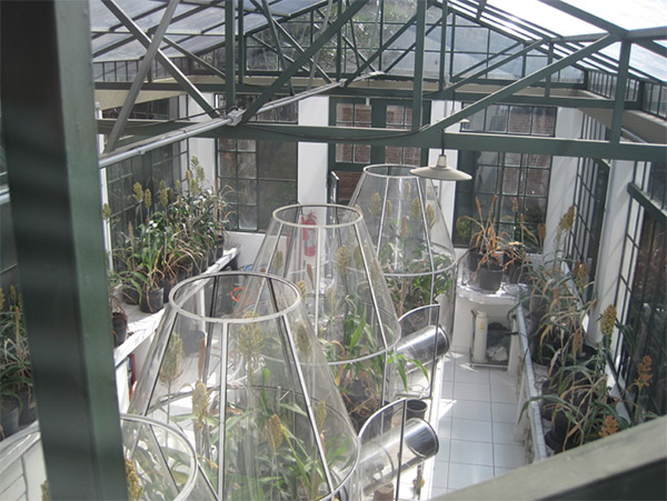 Photograph of large cylinders filled with plants in a greenhouse.