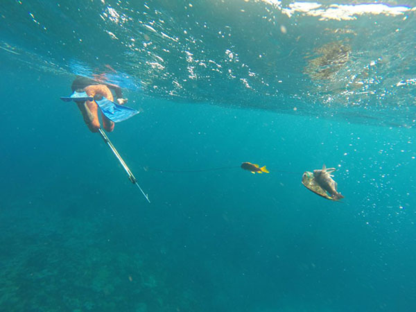 Underwater photograph of person swimming away with flippers on their feet and carrying a harpoon and a fishline with three fish attached.