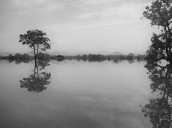 A black and white photograph of a flooded field with trees standing out from the water.