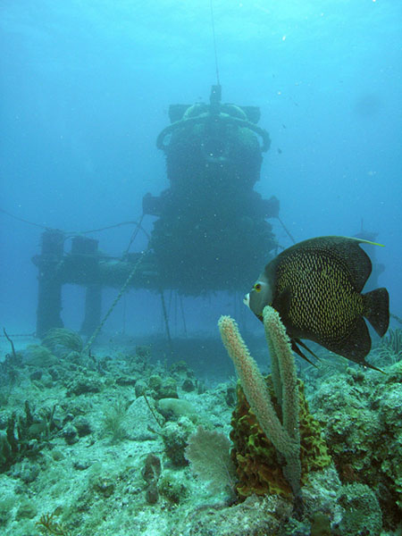 Underwater photograph of a fish and coral in the foreground and a structure in the background.
