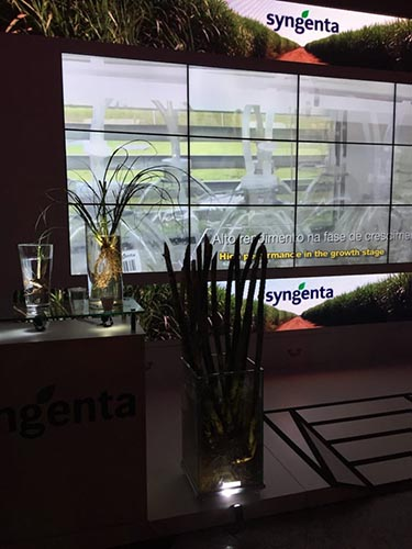 Ad advertisement for biotech company syngenta is shown surrounded by sugar cane plants in a dimly lit room.