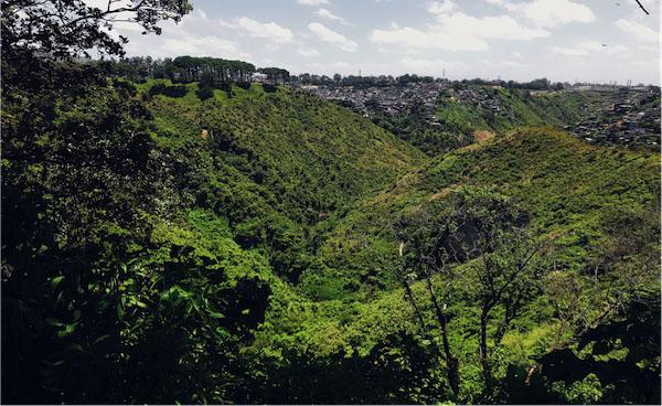 An undeveloped ravine, full of trees