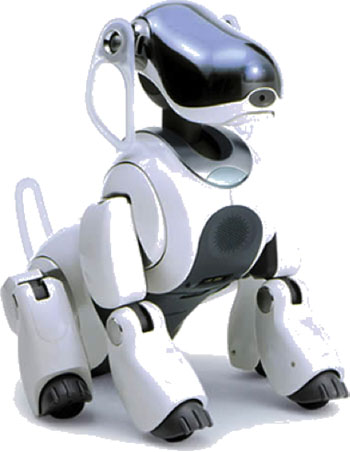 A white robotic dog with black paws, chest, and face.