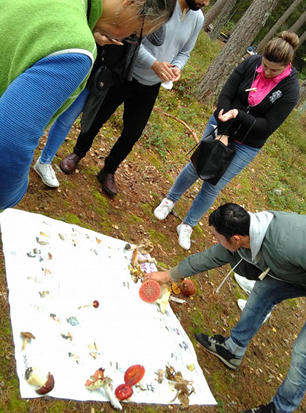Fungi samples are spread out on a blanket in the midst of some woods. NBI participants look down at the blanket and the samples as one man reaches down to manipulate them.