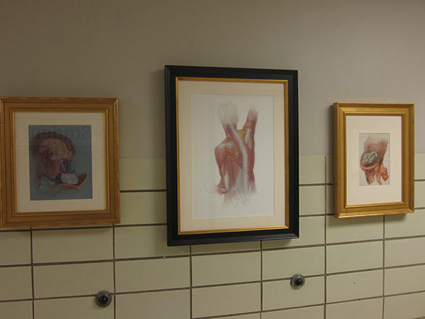 Medical illustrations displayed in the hallway of a graduate department. Photo by the author.