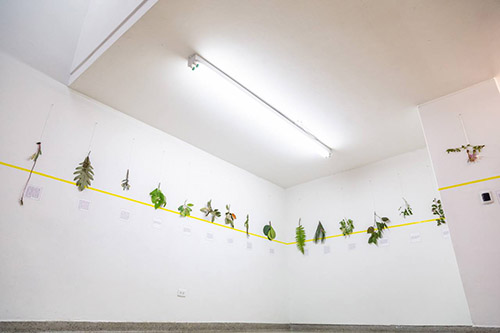 A picture of several plants distributed horizontally on a white wall