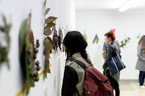 A picture of a woman observing dried plants hanging from a white wall