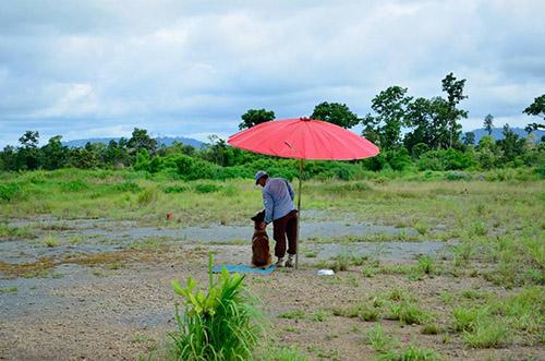 Human handler and Mine Detection Dog resting in training field in Ratanakiri, Cambodia.