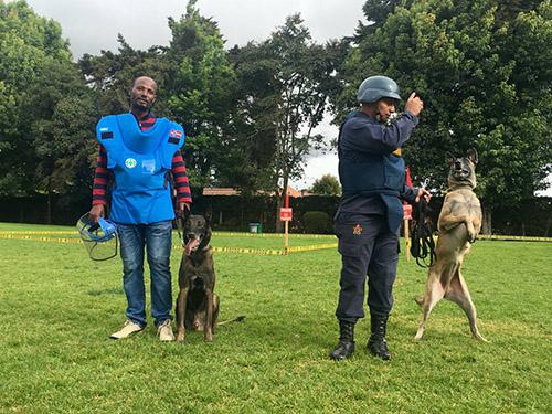 Two binomios caninos during an MDD workshop in Bogotá.
