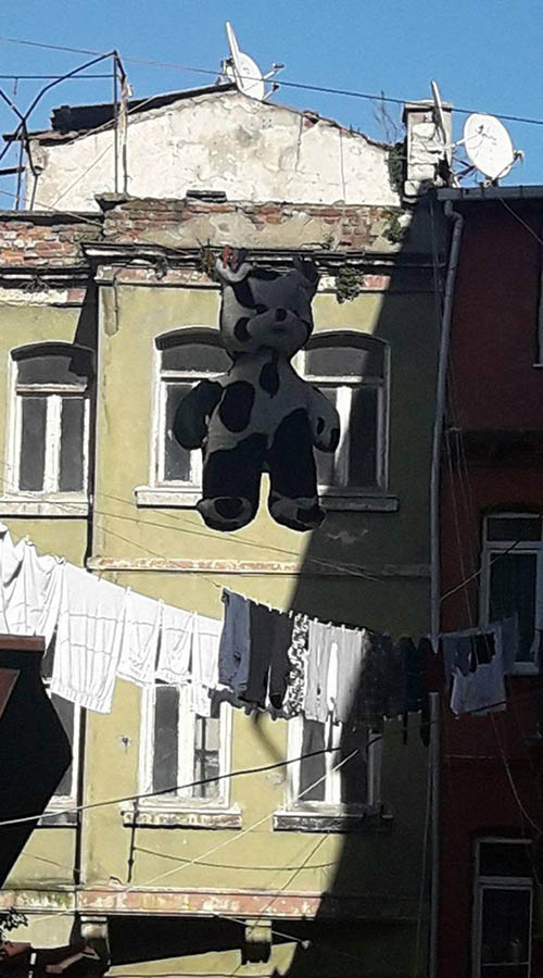A picture of several clothes lines with clean laundry and a bear suit among them. The bear suit is white with black spots on its paws, chest, and face. At the background, there is a green buildings with seven windows.