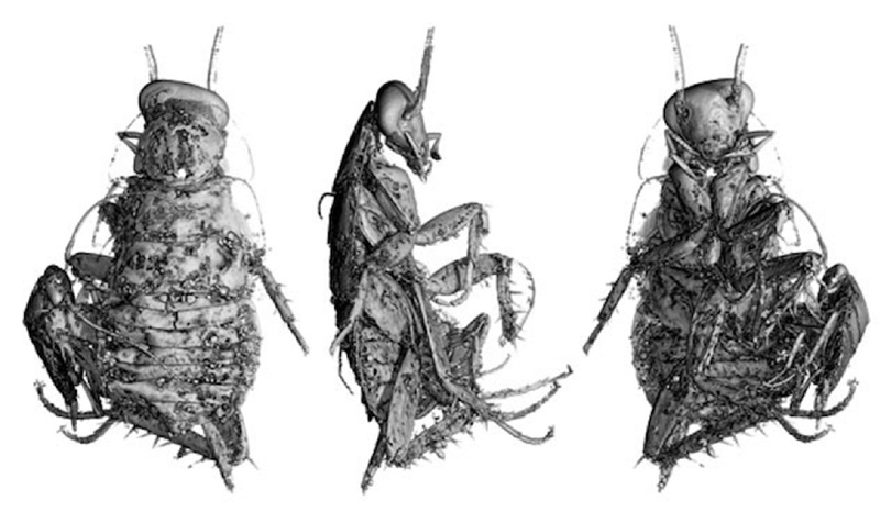 Detailed, black-and-white computer renderings of a cockroach. One rendering shows the cockroach's back, another shows its side, and a third shows its underside. The images were rendered by X-ray computed tomography.