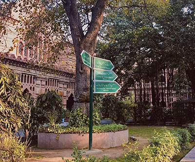 A large tree stands in front a Pakistani court building.