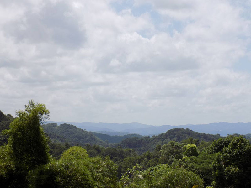 a picture of the forested landscape surround Accompong, Jamaica, one of the major Maroon communities on the island