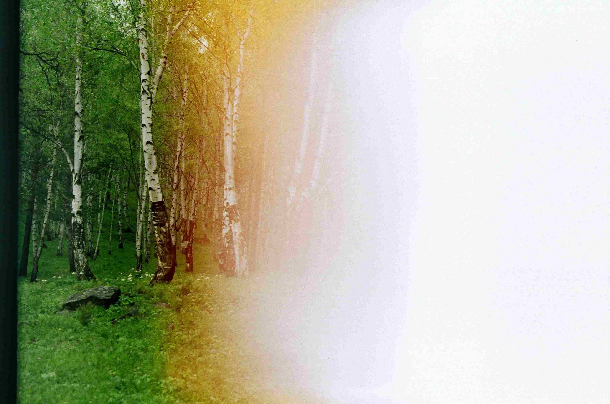 The left side of the image shows birch trees in the summer. The right side of the image is overexposed and white