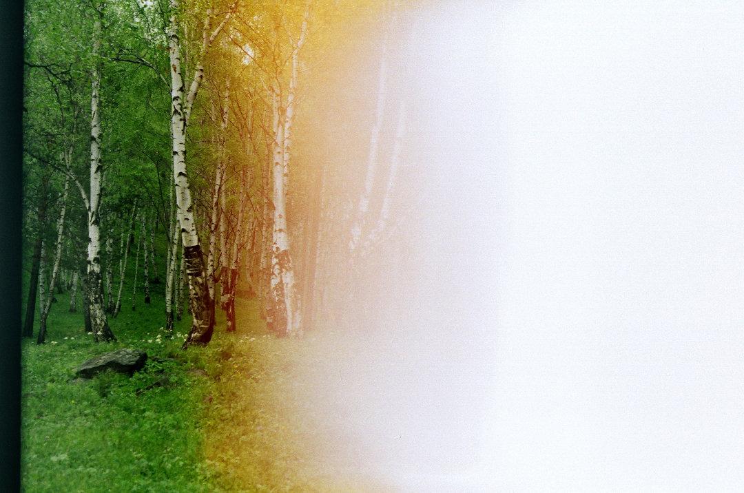 На фотографии изображен березовый лес летом. Правая половина фотографии засвечена, она белая и на ней не видно деревьев.