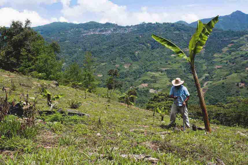 Un campesino descansa en la pendiente de su cafetal para mirar su teléfono. Al fondo hay otra ladera de otro cerro que también tiene un despliegue de plantaciones.