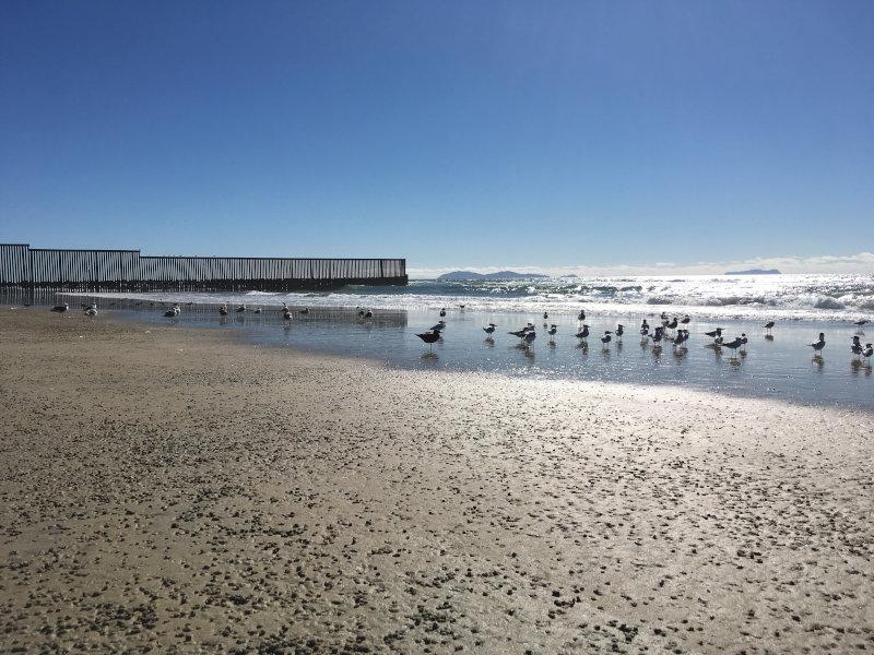 Los pájaros se paran en la playa bajo el cielo azul y sin nubes, con el muro fronterizo al fondo.