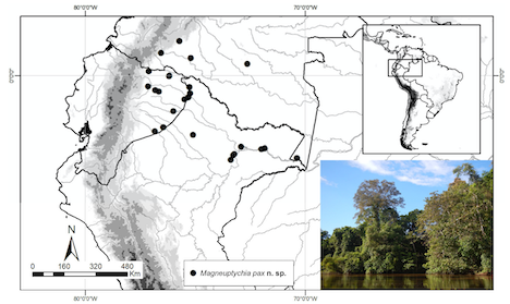 A simple map of northern South America indicating with dots where the butterfly has been recorded. An inset photograph shows trees along the Amazon river.